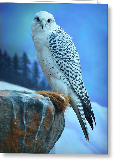 Artic Falcon Greeting Card by Janis Knight