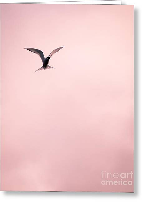 Greeting Card featuring the photograph Artic Tern High In The Sky by Peta Thames