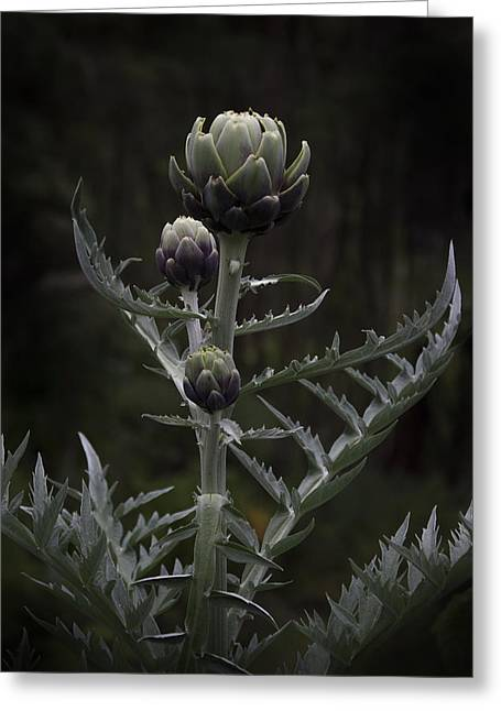 Greeting Card featuring the photograph Artichoke by Jocelyn Friis