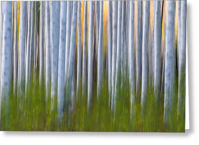 Artistic Aspens 2 Greeting Card by Larry Marshall
