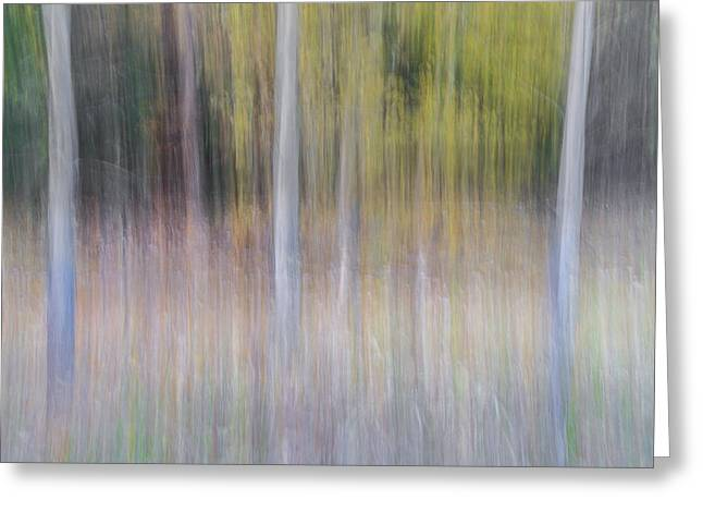 Artistic Birch Trees Greeting Card by Larry Marshall