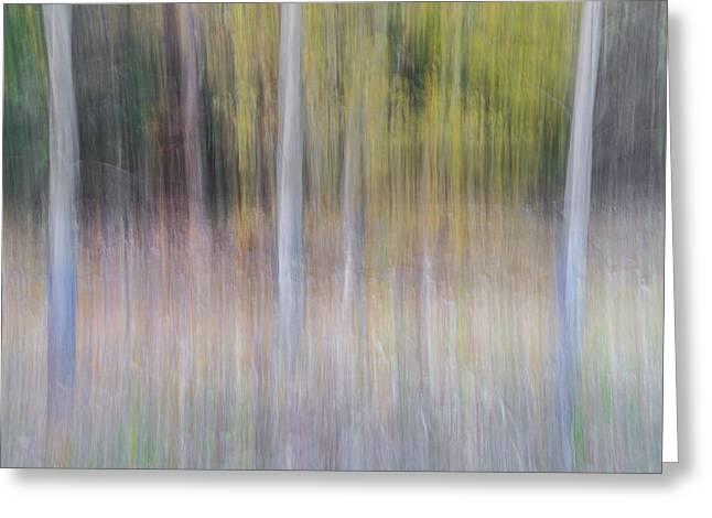 Artistic Birch Trees Greeting Card