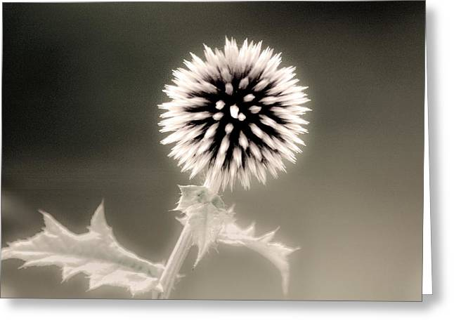 Artistic Black And White Flower Greeting Card