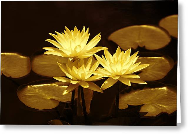 Artistic Gold Tone Water Lilies Greeting Card by Linda Phelps