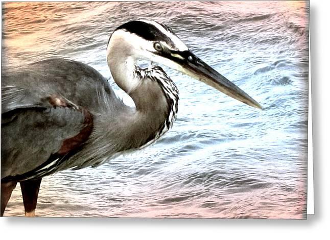 Artistic Great Blue Heron Greeting Card
