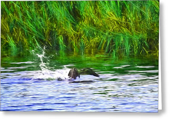 Artistic Splashing Start Cormorant Beginning To Fly From Water In Creek Of Enkoeping Enkoping Swe Greeting Card