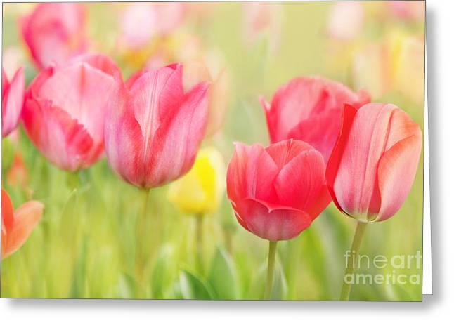 Artistic Tulips Greeting Card by Natalie Kinnear