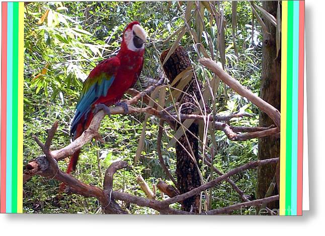 Greeting Card featuring the photograph Artistic Wild Hawaiian Parrot by Joseph Baril