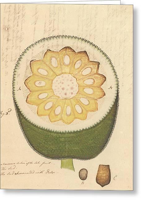 Artocarpus Heterophyllus Greeting Card by Natural History Museum, London