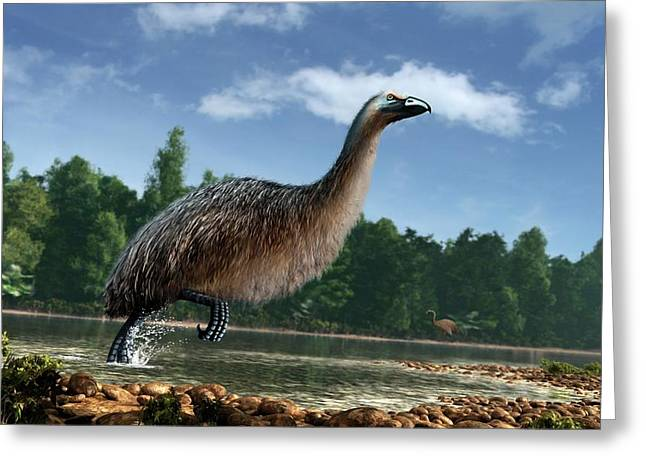 Artwork Of Giant Moa In New Zealand Greeting Card