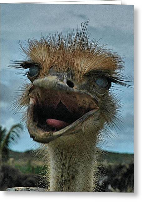 Aruba Ostrich Farm Greeting Card by Steven Richman