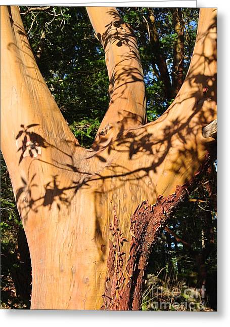 Arbutus - Shadows From Above Greeting Card