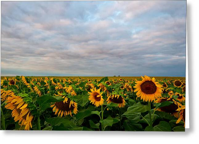 Greeting Card featuring the photograph As Far As The Eye Can See by Ronda Kimbrow