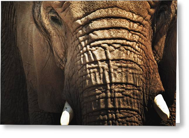 As High As An Elephant's Eye Greeting Card by Susan Desmore