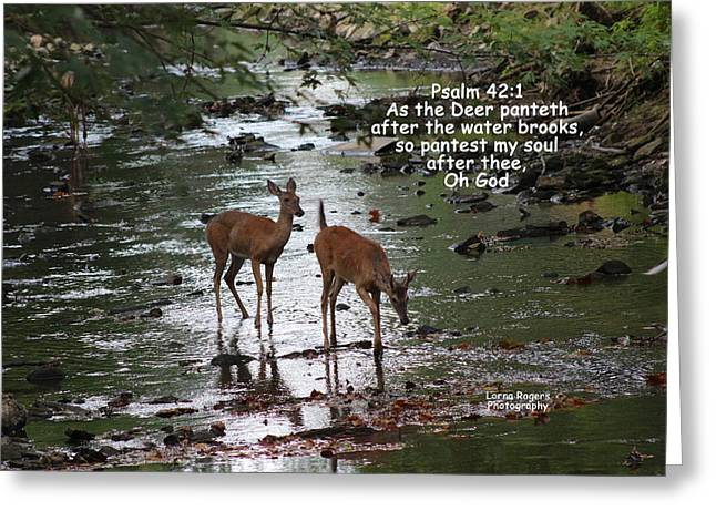 As The Deer Pants For Water Greeting Card by Lorna Rogers Photography