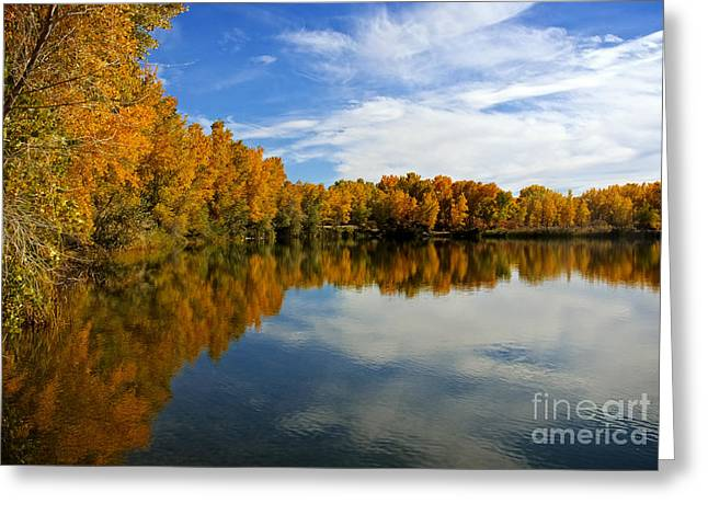 As The Leaves Turn Greeting Card by Bob Hislop
