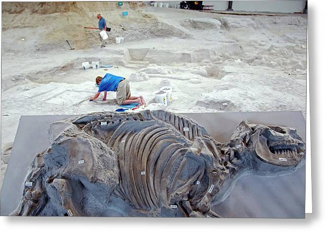 Ashfall Fossil Beds Display Greeting Card