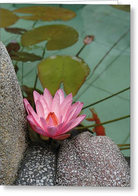 Asia, Vietnam Water Lily In A Temple Greeting Card by Kevin Oke