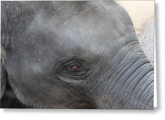 Asian Elephant Face Greeting Card by Colin Smeaton