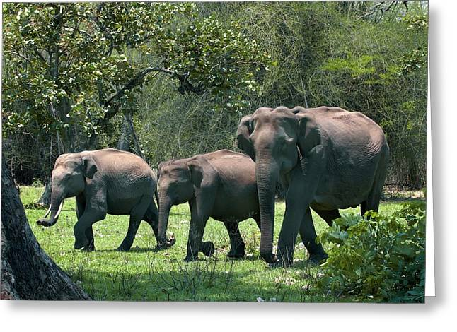 Asian Elephant Group Greeting Card