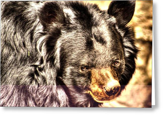 Asiatic Black Bear Greeting Card by Steven Parker