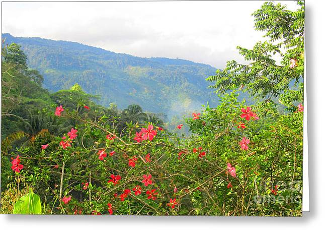 Asiatic Hibiscus Greeting Card by Tina M Wenger