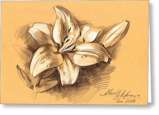 Asiatic Lily Flower With Bud Sketch Greeting Card