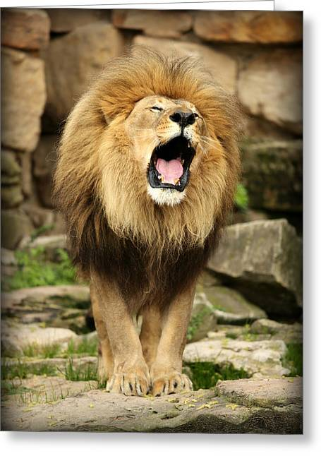 Aslan's Roar Greeting Card by Stephen Stookey