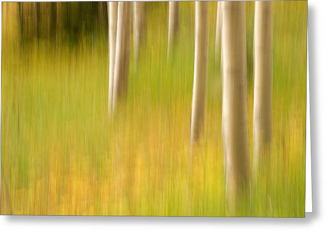 Aspen Abstract Greeting Card by Ronda Kimbrow