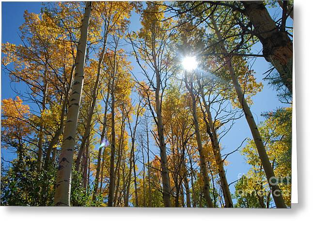 Aspen Afternoon Greeting Card by William Wyckoff