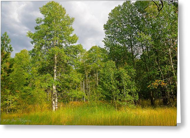Greeting Card featuring the photograph Aspen And Others by Jim Thompson