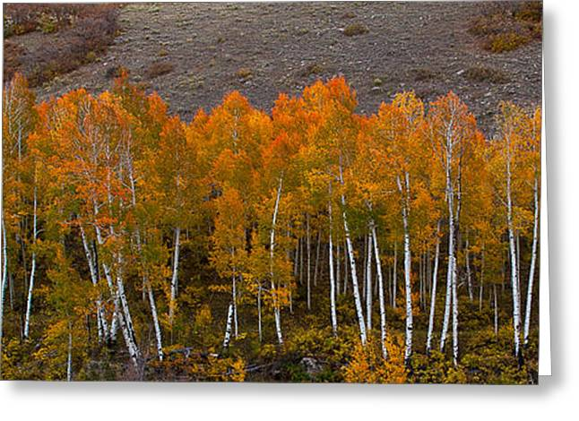 Greeting Card featuring the photograph Aspen Band by Steven Reed