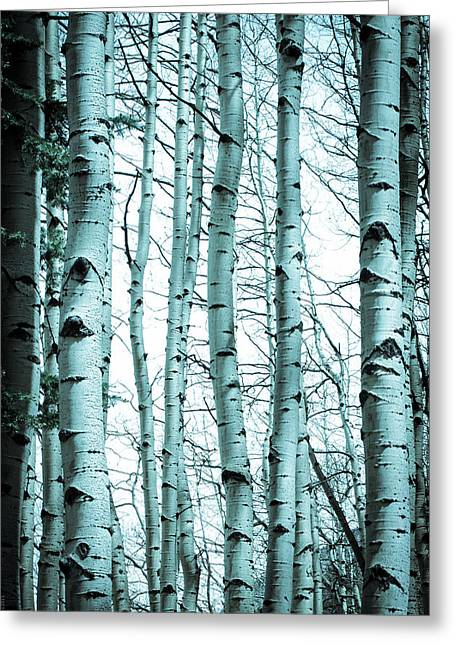 Aspen Blues Greeting Card by Debbie Karnes