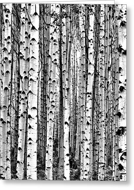 Aspen Boles Greeting Card
