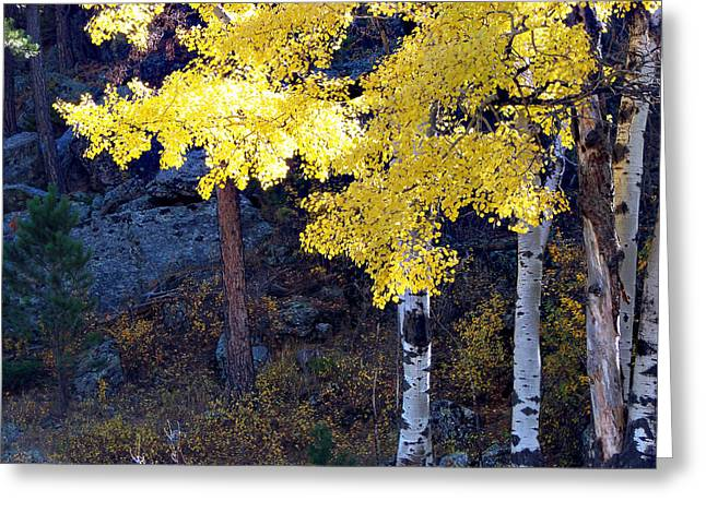 Aspen Bright Greeting Card