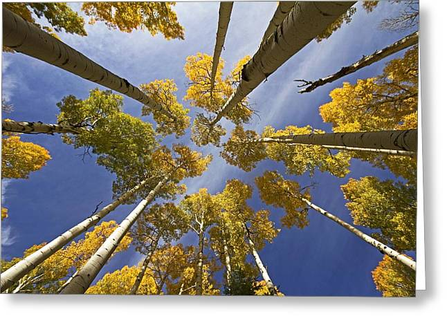 Aspen Color Greeting Card by Sue Cullumber