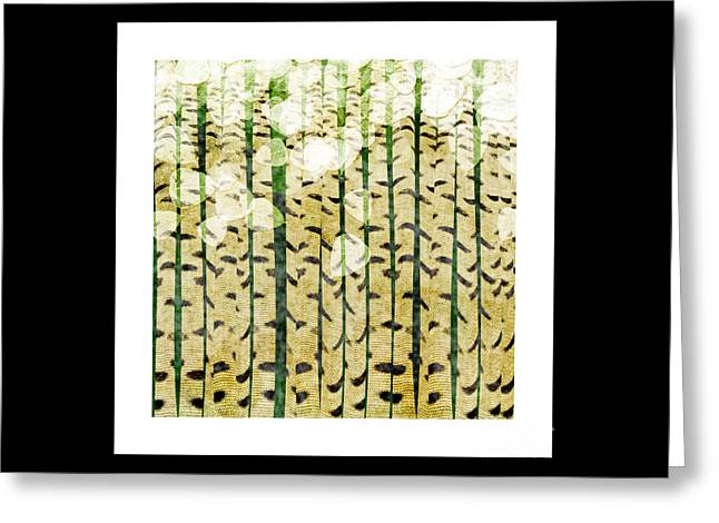 Aspen Colorado Abstract Square 3 Greeting Card