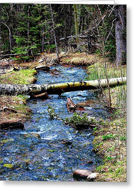 Aspen Crossing Mountain Stream Greeting Card by Barbara Chichester
