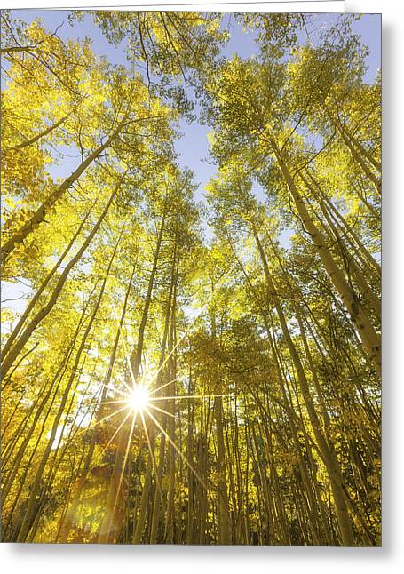 Aspen Day Dreams Greeting Card
