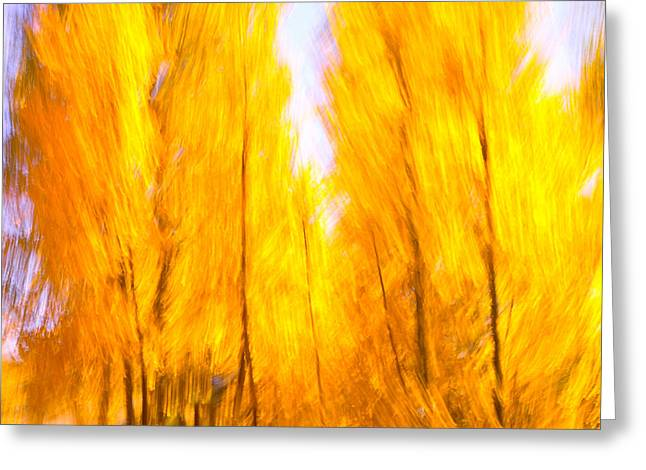 Aspen Fire Greeting Card by Brian Brown