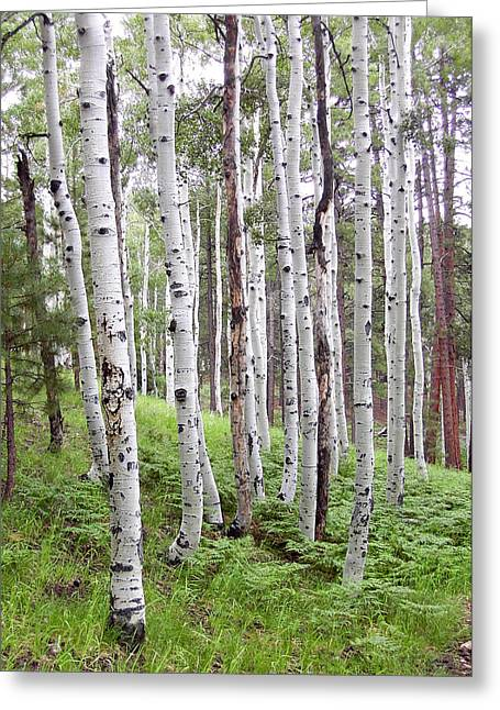 Aspen Forest Greeting Card by Laurel Powell