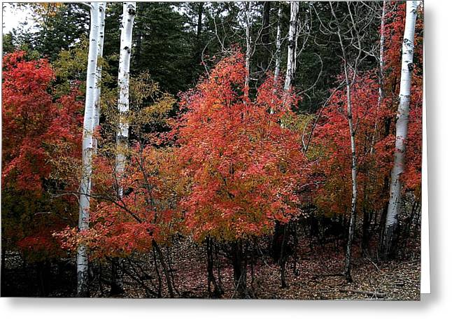 Aspen Glory Greeting Card