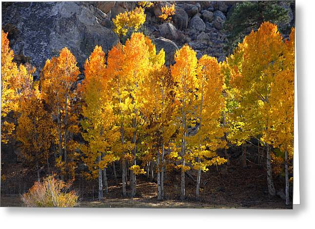 Greeting Card featuring the photograph Aspen Gold by Lynn Bauer