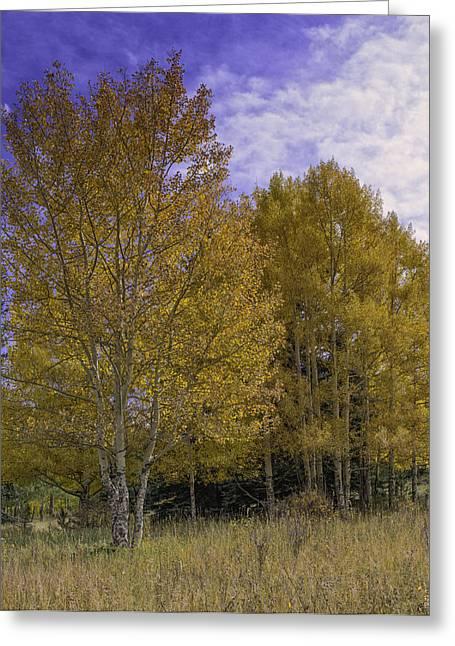Aspen Goldrush Greeting Card by Tom Wilbert