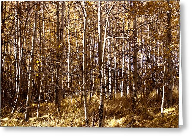 Greeting Card featuring the photograph Aspen Grove In Lake Tahoe by William Havle