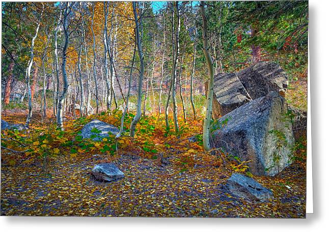 Greeting Card featuring the photograph Aspen Grove by Jim Thompson