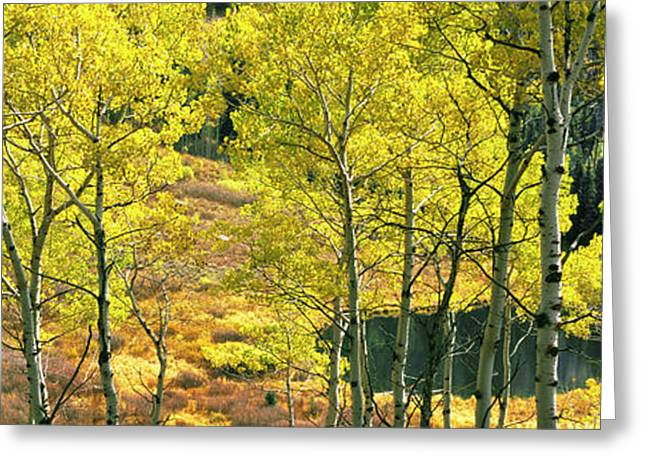 Aspen Grove, Moose Ponds, Grand Teton Greeting Card by Panoramic Images