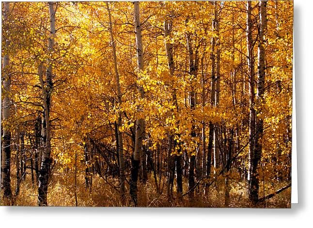 Aspen Grove Tahoe City Greeting Card