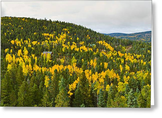 Aspen Hillside In Autumn, Sangre De Greeting Card by Panoramic Images
