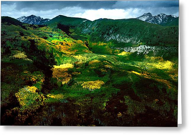 Aspen In Autumn Gold Greeting Card